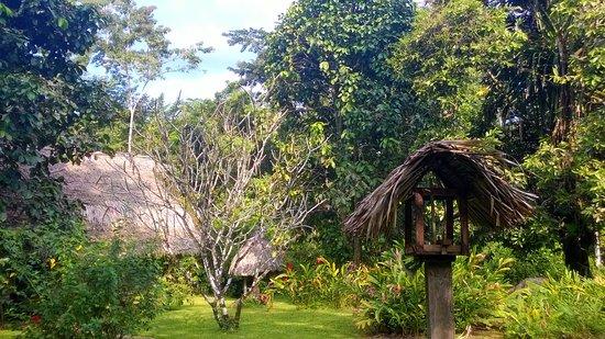 Punta Gorda, Belize: Gardens
