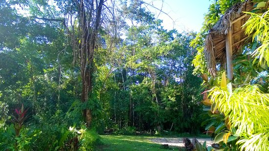 Punta Gorda, Belize: Garden
