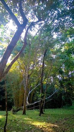 Punta Gorda, Belize: Hike trail