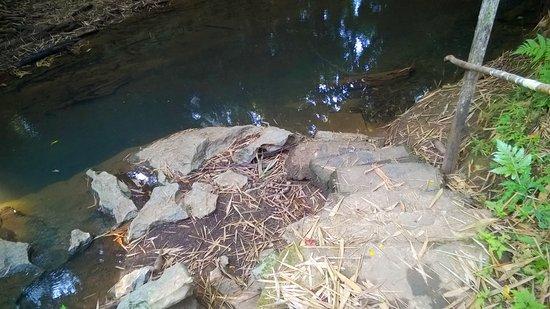 Punta Gorda, Belize: Creek