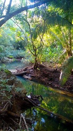 ปุนตากอร์ดา, เบลีซ: Creek
