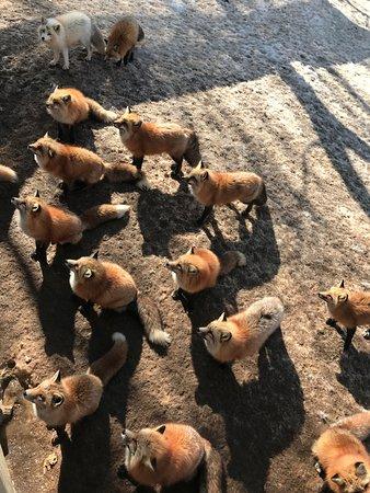 Shiroishi, Japan: From the feeding deck