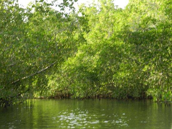 Toubakouta, Senegal: la mangrove