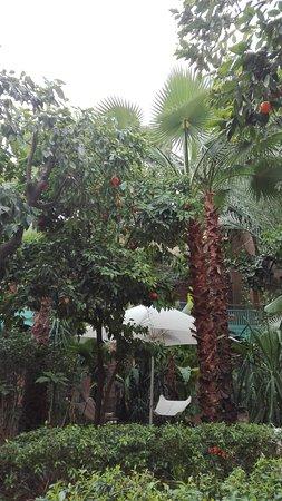Les Jardins de la Medina: IMG_20170313_092730_large.jpg