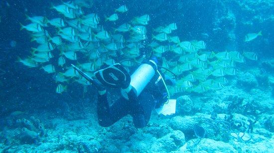 The Reef Marina: Atravesando cardúmenes.