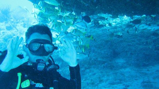The Reef Marina: A la sombra del arrecife.