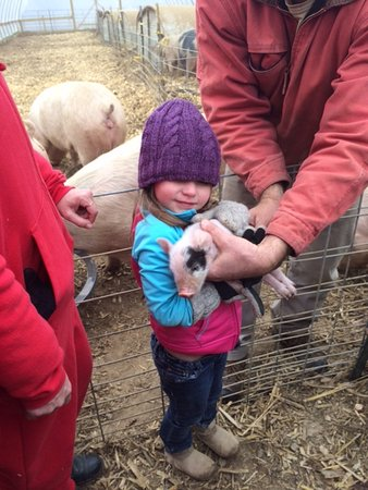 Fairview, North Carolina: Baby pig