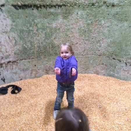 Fairview, Северная Каролина: Throwing corn in the silo