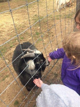 Fairview, Северная Каролина: Petting the goat