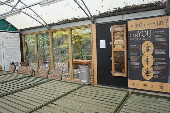 Indoor viewing area and glass observation hive at The Bee Centre, Samlesbury