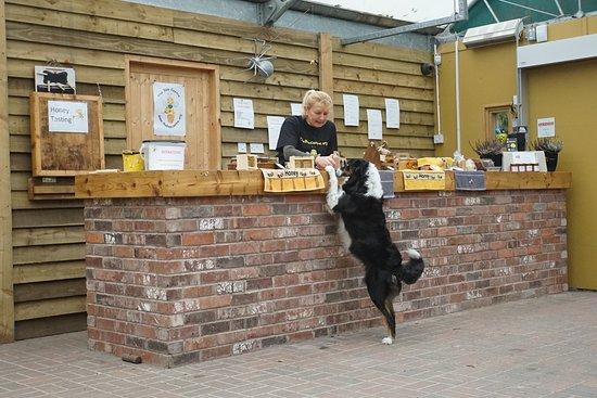 Samlesbury, UK: Roxy the dog shopping for honey (and cheese)