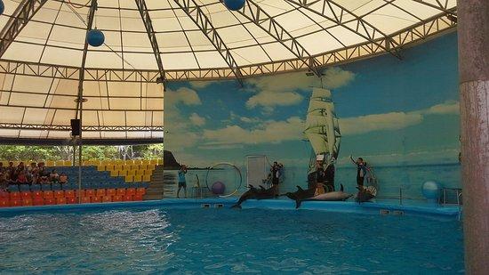 Dolphins Bay Phuket: Дельфинарий