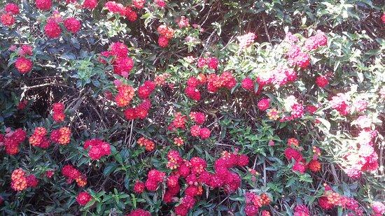 Rheinberg Homestay : Colourful garden