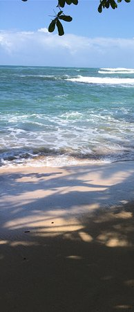 Foto de Punta Uva