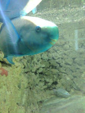Гамильтон, Бермуды: Aquarium