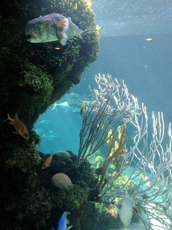 Hamilton, Islas Bermudas: Aquarium
