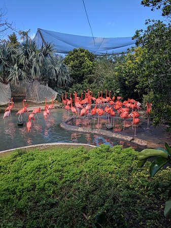 Hamilton, Islas Bermudas: Flamingos!