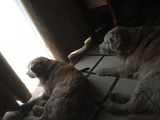 Puerto de Luna Pet Friendly and Family Suites: Noches hermosas y en las habitaciones las mascotas descansan muy tranquilos