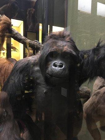 Natural History Museum at Tring: photo1.jpg