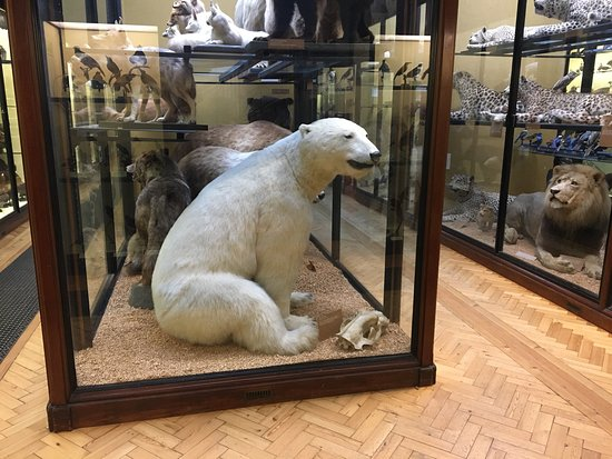Natural History Museum at Tring: photo2.jpg