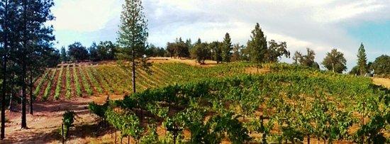 Sutter Creek, CA: Uphill Vineyards Cabernet Sauvignon