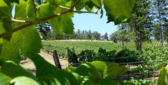 Sutter Creek, Californië: Uphill Vineyards Tempranillo