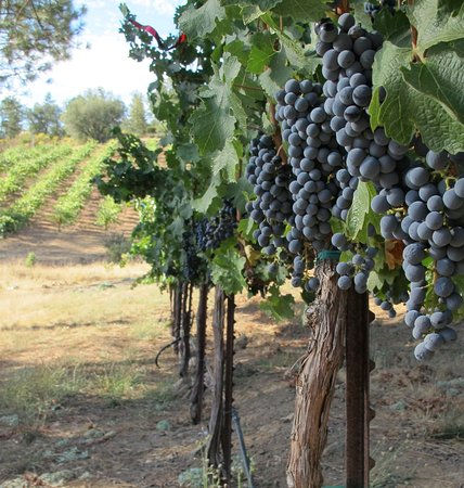 Sutter Creek, CA: Some of our 2014 Cabernet