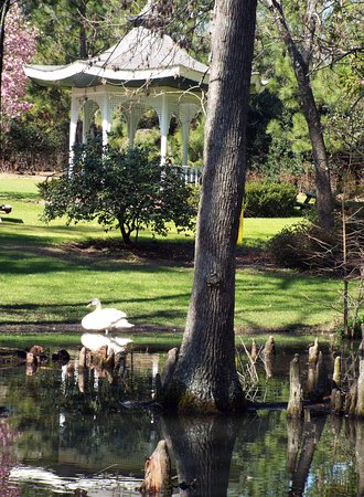 Swan Lake Iris Gardens: One of the many lovely ponds with a swan and gazebo.