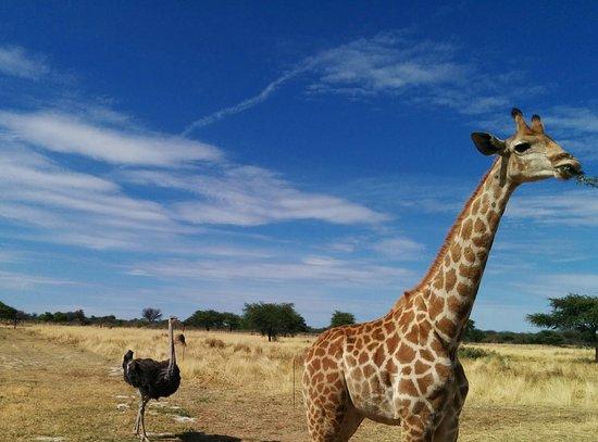 Okahandja, Намибия: IMG_20141107_121751_large.jpg