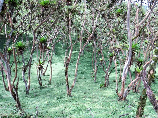 Hacienda San Vicente: View of vegetation adjacent to trail
