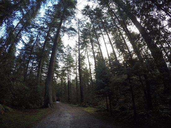Central Park: Floresta