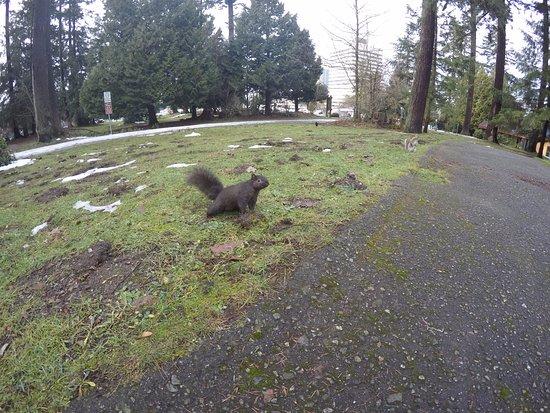 Central Park: Esquilos