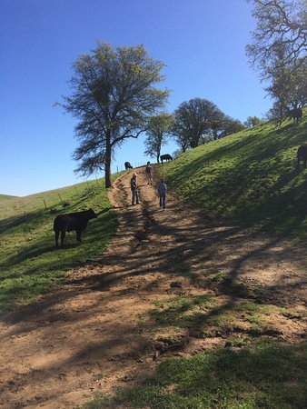 Round Valley Regional Preserve: One of the uphill paths.