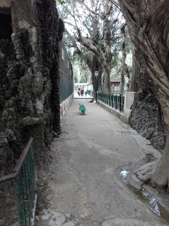 Alger, Argelia: paon libre