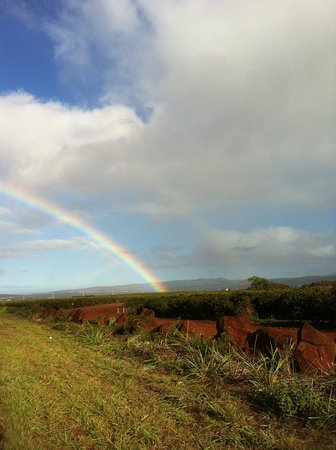 Kalaheo, Hawái: rainbow coffee