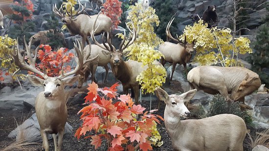 Buda, TX: Antelope
