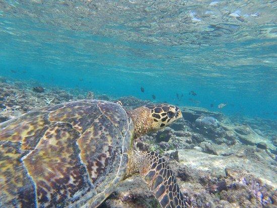 Velidhu Island Resort: photo1.jpg
