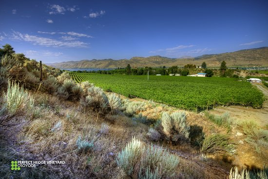 Penticton, Kanada: Perfect Hedge Vineyard Osoyoos