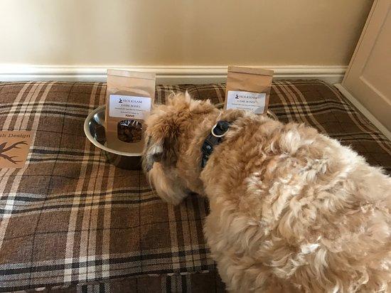 The Victoria Inn: Dogs love it!