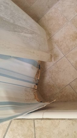 Key Largo House Boatel : Shower Curtain infested with mold