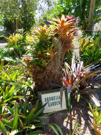 Everglades Wonder Gardens: Bromeliad Garden