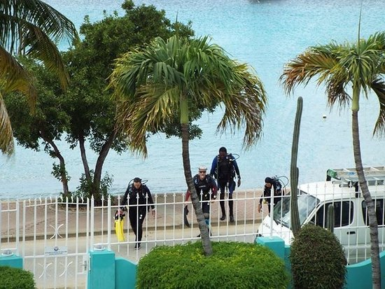 Bonaire Oceanfront Apartments-billede