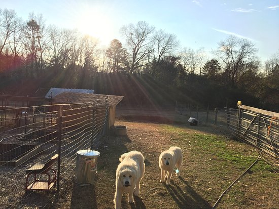 Athens, جورجيا: Some pictures from my stay with John and Rebecca at Corriedale Farm. Beautiful location and incr