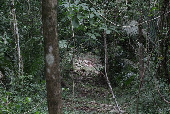 San Antonio, Belice: Nature trail on property