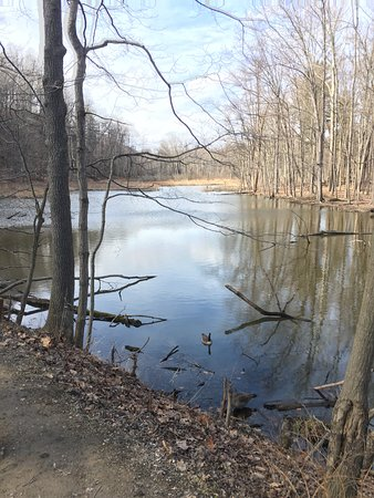 Rocky River Reservation: POND BEHIND THE NATURE CENTER