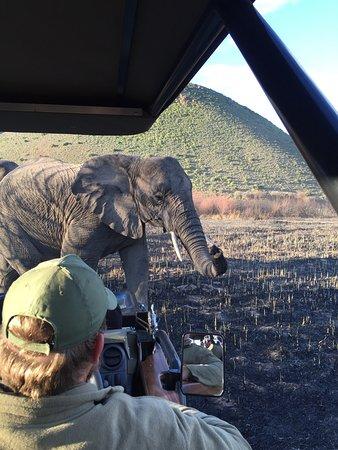 Sanbona Wildlife Reserve - Tilney Manor, Dwyka Tented Lodge, Gondwana Lodge: photo0.jpg