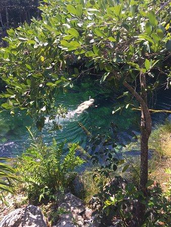 Yucatan, Mexique : Cenote Jardin del Eden