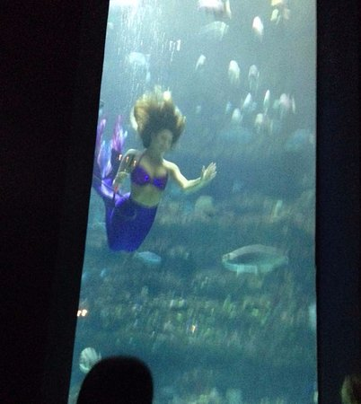 North Carolina Aquarium At Fort Fisher Visiting Mermaids From Wikki Wachi Fla