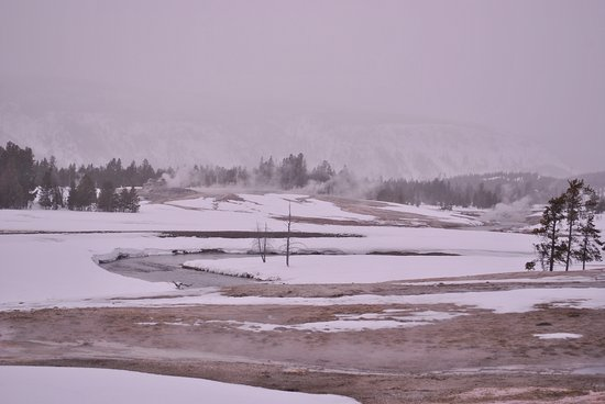 Wildlife Expeditions of Teton Science Schools: Another view of the thermal activity and snow.