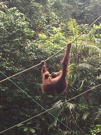 Semenggoh Nature Reserve: photo0.jpg